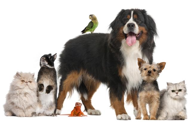 Animais de Estimação e Viagens!!!!