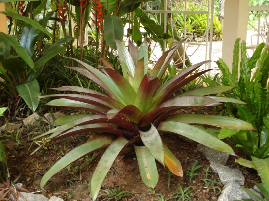 Jardim Botanico RJ 069