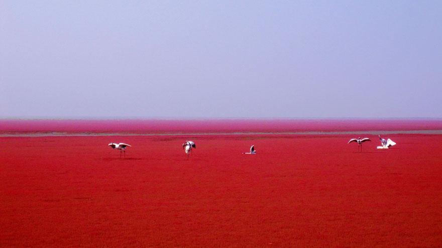 Praia Vermelha - Panjin, China (3/3)