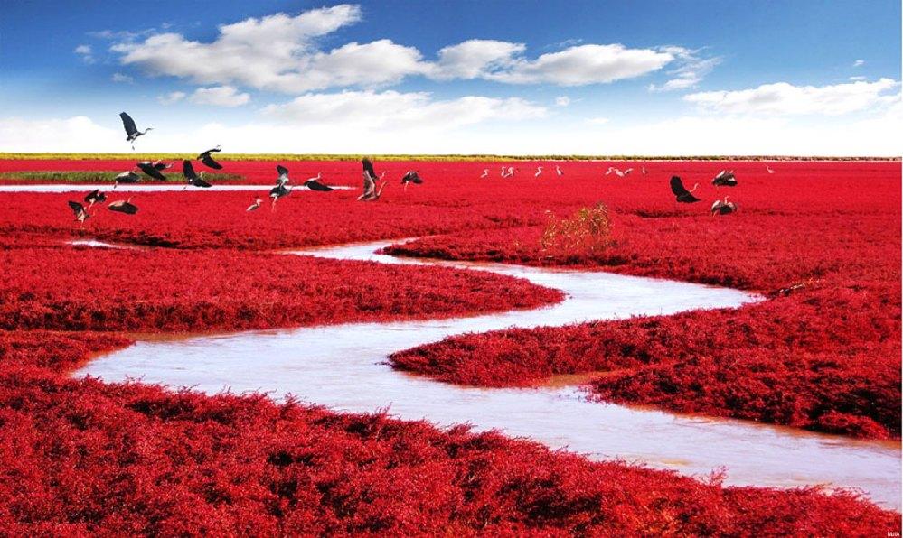 Praia Vermelha - Panjin, China (2/3)