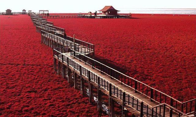 Praia Vermelha - Panjin, China (1/3)